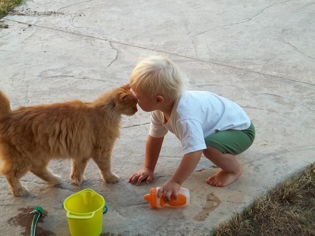 gato_mimoso