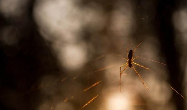 spider-379066_1280