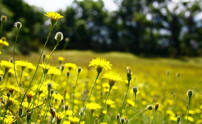 campo-flores