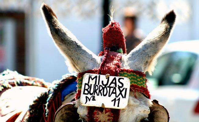 burrotaxi-mijas
