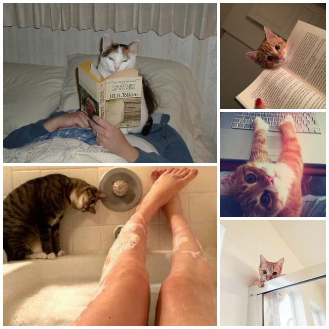 gato-intimidad