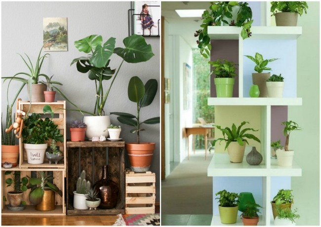 10 ideas para decorar tu casa con plantas y flores mym for Adornos originales para decorar casa