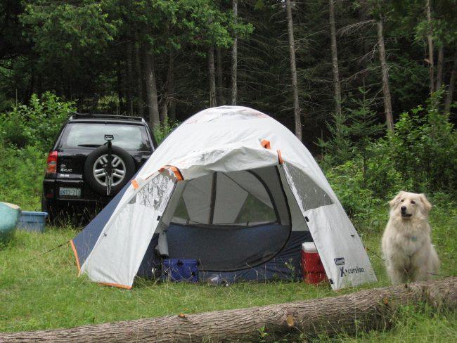 perro camping