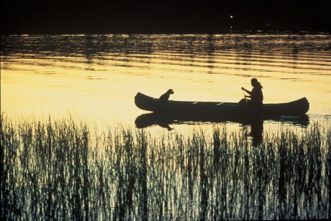 perro vacaciones canoa