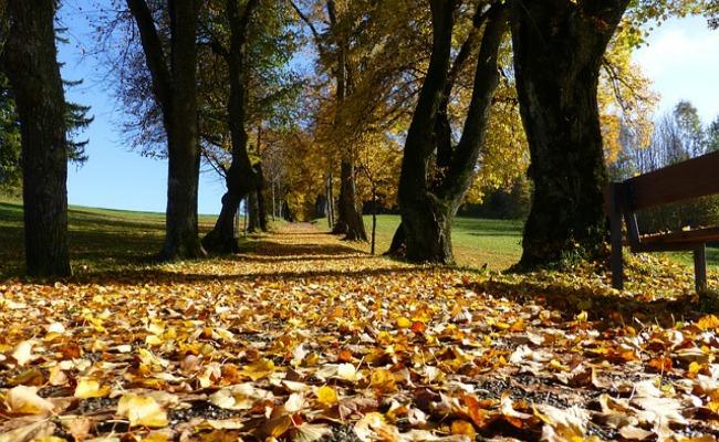 adelantar otoño