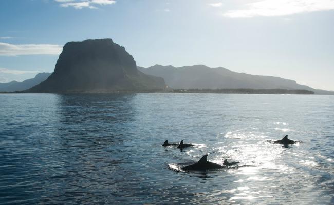 Mauricio-delfines