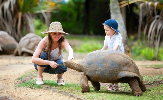 Mauricio-tortuga-gigante