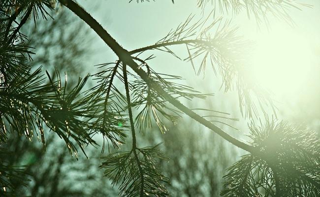 dias de sol en invierno