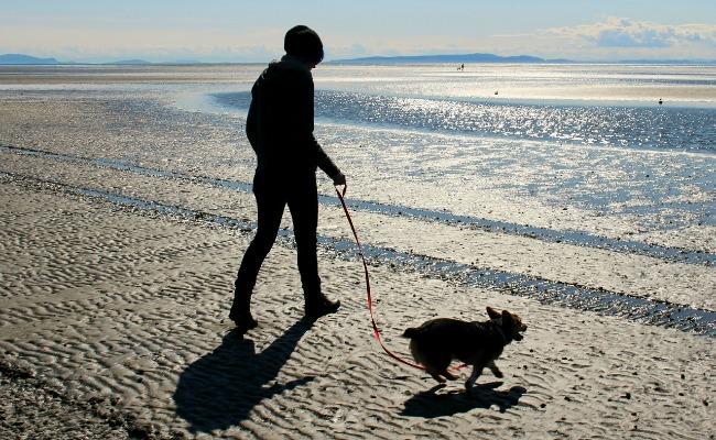 perro atado playa - cosas incívicas que hacemos